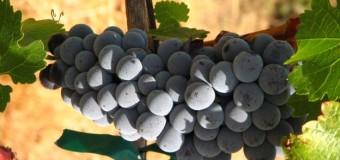 Vino naturale, biologico o biodinamico: quali sono le differenze?
